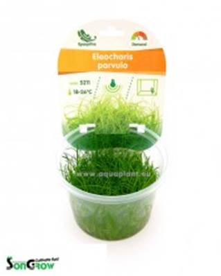 ELEOCHARIS PARVULA (TARRINA 100 ML)